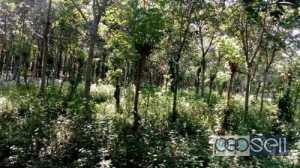 7 acre Land and house for Sale at Wayanad
