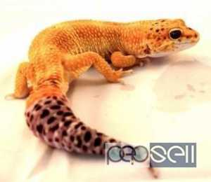 All types of exotic birds, animals and reptiles for sale in delhi