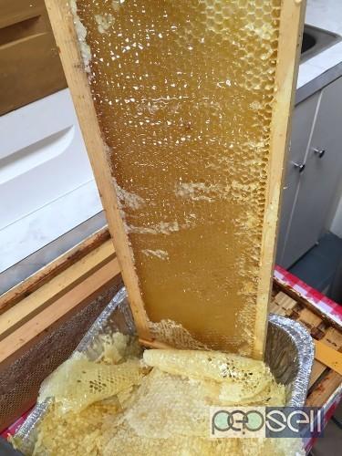Natural organic honey for sale in Coimbatore , Tamil Nadu 0