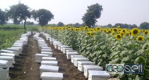 Natural organic honey for sale in Coimbatore , Tamil Nadu 1