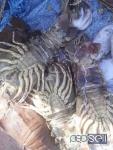 Get Fresh Crabs/ Prawns in chennai , Tamilnadu, India