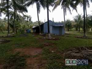1.85 acre coconut farm for sale at Pollachi
