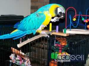 Parrots, cockatoos,Exotic birds and exotic animals for sale
