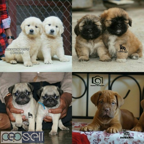 All breeds available here 3