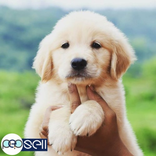 All Breed Puppies N Kittens Available Mangalore Free Classifieds