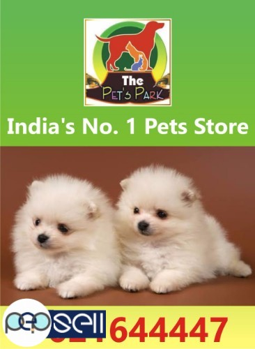 Dog Puppies Persian Kitten The Pets Park 9021644447 Indore Free Classifieds