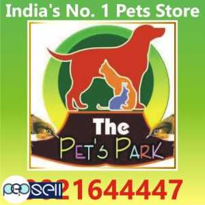 DOG PUPPIES & PERSIAN KITTEN;THE PETS PARK ;9021644447