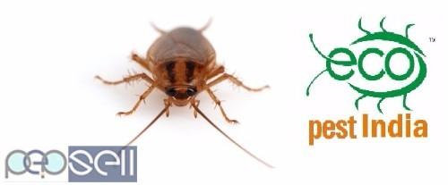 Pest control pest services 0