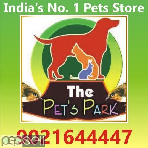 THE PETS PARK OFFER ON DOGS PUPPIES & KITTENS 0