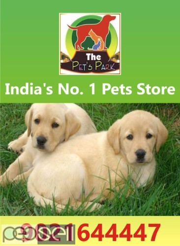 THE PETS PARK OFFER ON DOGS PUPPIES & KITTENS 2