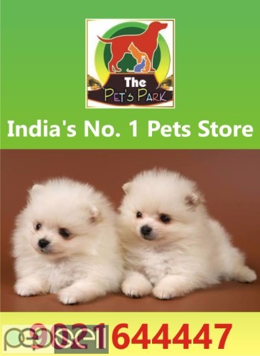 DOGS PUPPIES AND PERSIAN KITTENS 9021644447 2