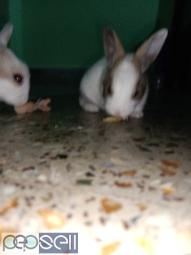 5 baby rabbits available for new homes 2