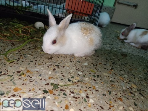 5 baby rabbits available for new homes 1