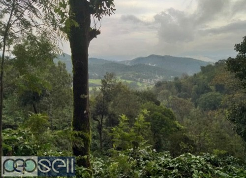 Coffee estate for sale with furtive soil 0