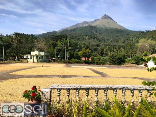 Coffee estate for sale with furtive soil 1