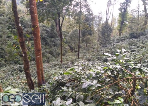 Coffee estate for sale with furtive soil 2