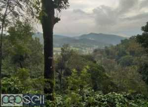 Coffee estate for sale with furtive soil