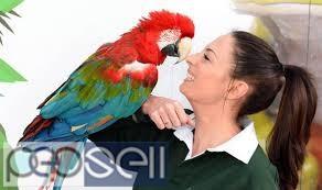 Multi Parrots Species Avian Center Pet Birds On Sale 0